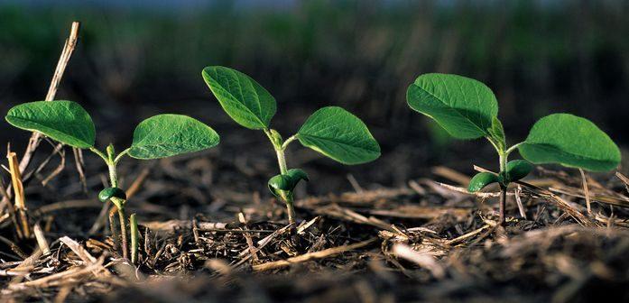 Fertilización en soja por grupo de madurez