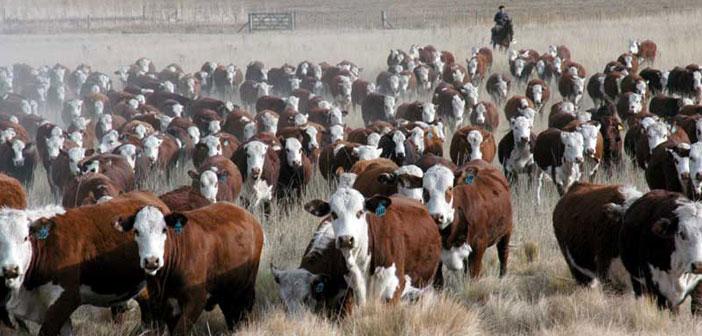 La ganadería bovina y el carbono en la encrucijada global