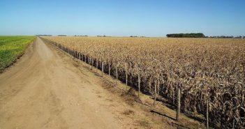 El precio de la tierra en Córdoba