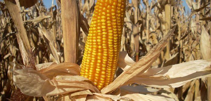 Oferta y demanda mundial de granos 2020/21