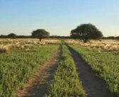 El precio de la tierra en La Pampa