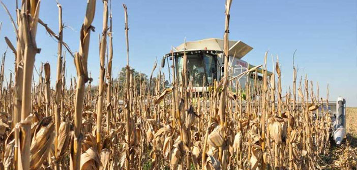 Producción y exportación de granos en el último quinquenio