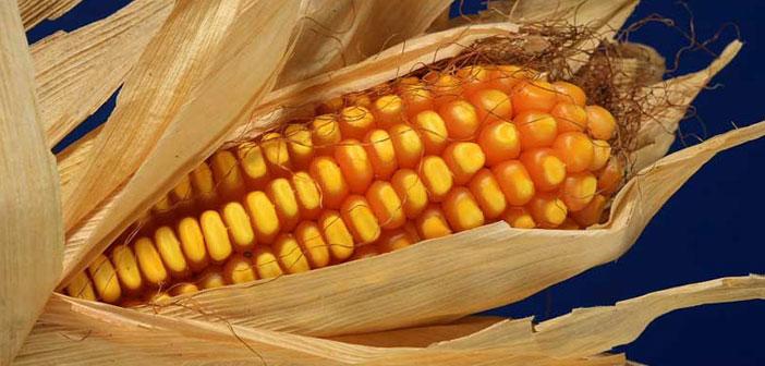 Proyecciones de maíz y soja 2018/19