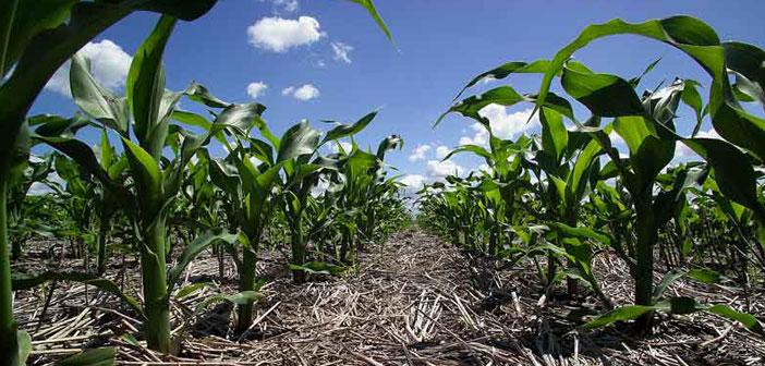 Soja, maíz y trigo/soja en campos arrendados 2019/20