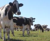 Los vaivenes de la producción de leche