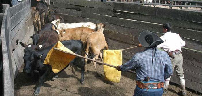 10 errores subjetivos en el trabajo del ganado