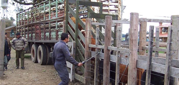 El embarque del ganado
