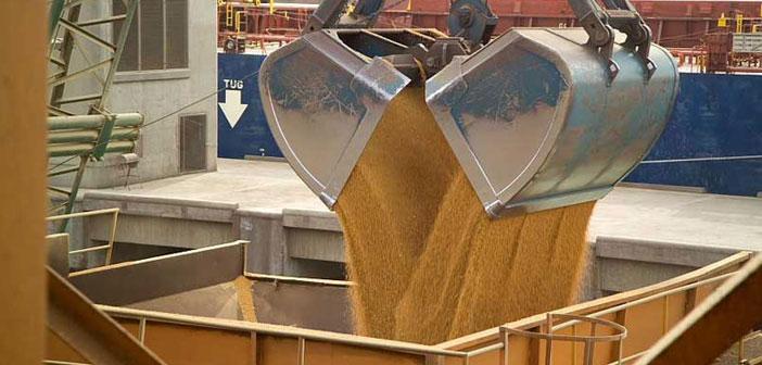 Oferta y demanda mundial de granos 2019/20