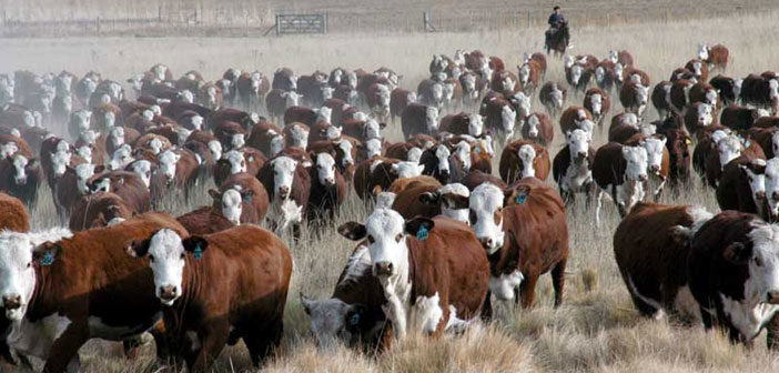 En defensa de la ganadería