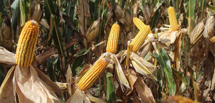 Oferta y demanda mundial de granos 2021/22