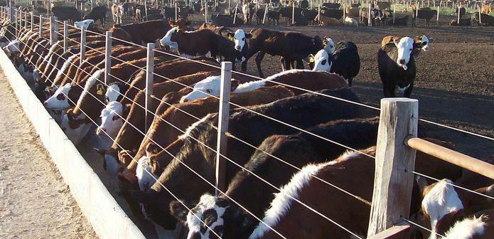 Hacia dónde debería ir la cadena de ganados y carnes
